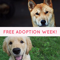 Optimistic Free Adoption Week Instagram Post Dog Adoption Flyer