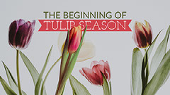 Spring Tulip Season Blog Post Graphic with Flowers Plants