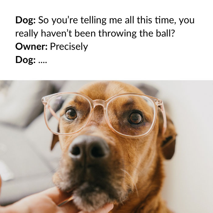 Dog: So you're telling me all this time, you really haven't been throwing the ball?<BR>Owner: Precisely<BR>Dog: .... Dog Memes
