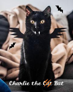 Cute Spooky Cat Halloween Bat Costume Collage Cat