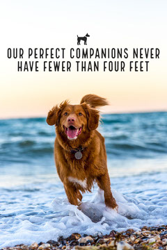 Perfect Companions Pinterest Dog