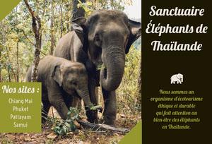 Thailand elephant sanitary travel brochures Brochure