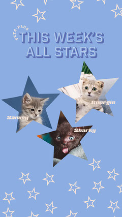 Blue Cats All Stars Instagram Story  Stars