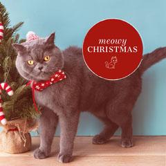 Claret With Grey Cat Sentence Instagram Graphic Cat