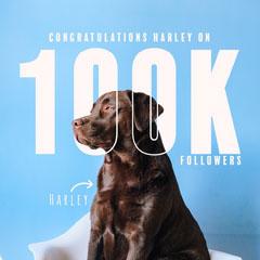 Dog Harley 100k Milestone Instagram Square Dog