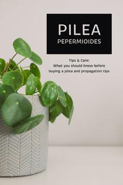 pilea pepermioides pinterest  Plants