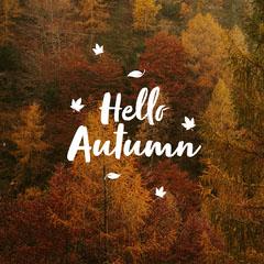 Warm Toned, Hello Autumn Catchphrase Instagram Square Hello