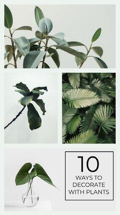 plant blog Instagram story Decor
