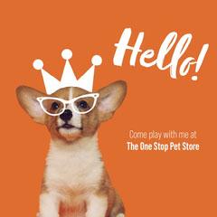 Orange White Dog Playful Pet Store Instagram Square Pets