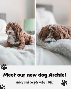 White New Dog Announcement Instagram Portrait Dog Adoption Flyer