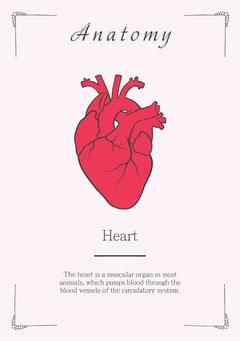 Anatomy - Heart Flashcard Heart