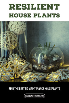 Resilient Houseplant Pinterest Graphic Plants