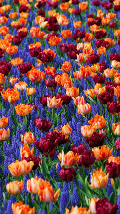 Colorful Flowered Pattern Wallpaper Background