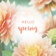 Pink and WHite Hello Spring Instagram Graphic Hello