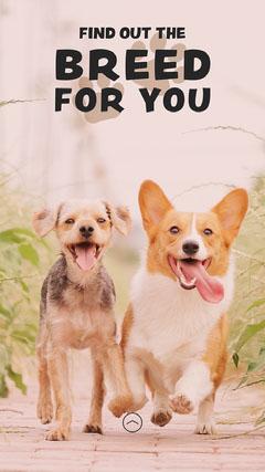Dog Photo Dog Breed Guide Instagram Story Dog