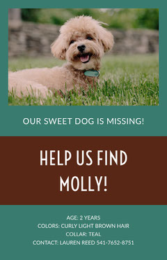 HELP US FIND MOLLY!  Dog