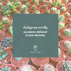 Instagram worthy Plants