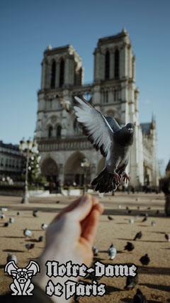 Notre Dame De Paris Snapchat Geofilter Bird