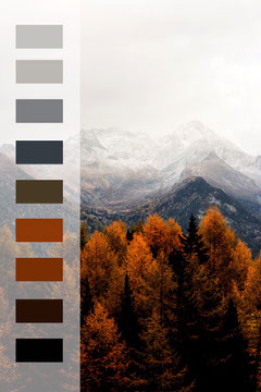 Pinterest nature color mood board  Forest
