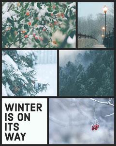 Winter Collage Instagram Portrait Forest