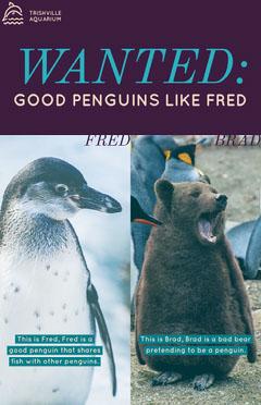 Wanted Penguin for Aquarium Flyer Animal