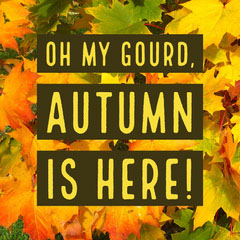 Yellow Autumn Leaves Instagram Square Autumn