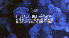 Blue and Black, Yellyfish Funny Quote, Desktop Wallpaper Fish
