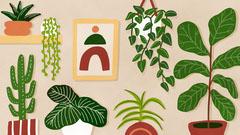 Houseplant Illustration Zoom Background Leaf