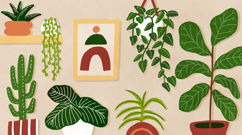 Houseplant Illustration Zoom Background Planos de fundo para Zoom