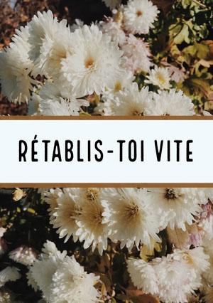 white flowers getting well soon cards Carte de bon rétablissement