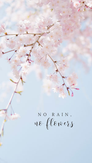 No Rain, No Flowers Phone Wallpaper Zoom Backgrounds