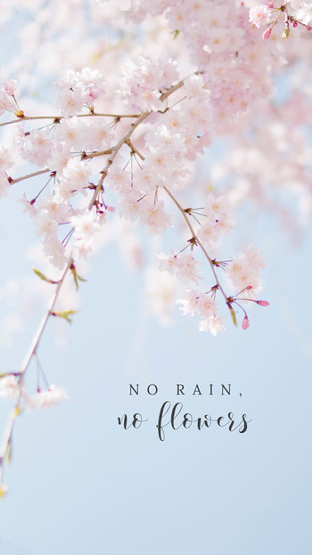 Pink No Rain No Flowers Phone Wallpaper Planos de fundo para Zoom