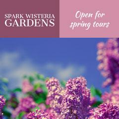 Violet Spark Wisteria Gardens Advertisement Garden