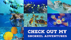 Blue and White Collage Snorkel Facebook Banner Fish