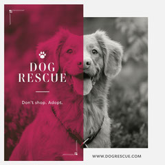 Dog Rescue Instagram Square Dog Adoption Flyer