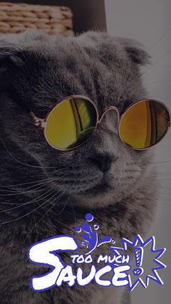 White With Cat Wearing Sunglasses Social Post Cat