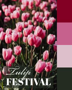 tulip festival igportrait  Festival