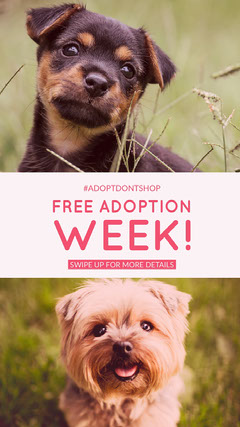 Free adoption week! Dog Adoption Flyer