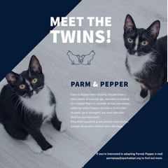 White and Blue Cats Adoption Social Post Cat