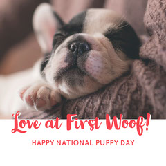 National Puppy Day Square Instagram Graphic with Sleeping Puppy Pets