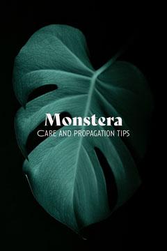 monstera pinterest  Leaf