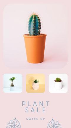 plant sale instagram story Cactus