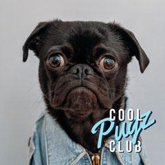 Blue, Light Toned Puppy Portrait Instagram Post Pets