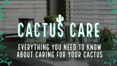 Cactus Houseplant Care Youtube Thumbnail Cactus