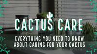 CACTUS CARE Social Media Marketing