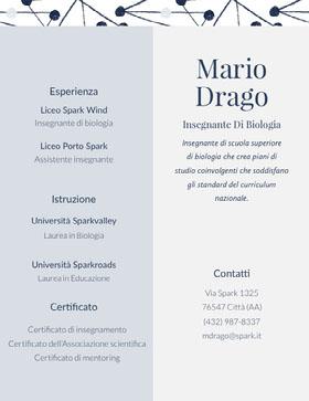 Mario<BR>Drago Curriculum professionale