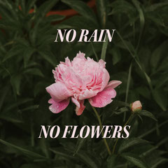 NO FLOWERS Positive Thought