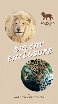Beige Zoo Big Cat Enclosure Instagram Story Cat
