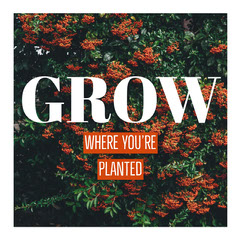 Growth Inspirational Quote Nature