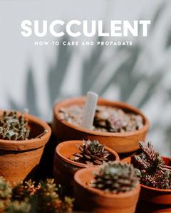 succulent care tip instagram portrait Plants